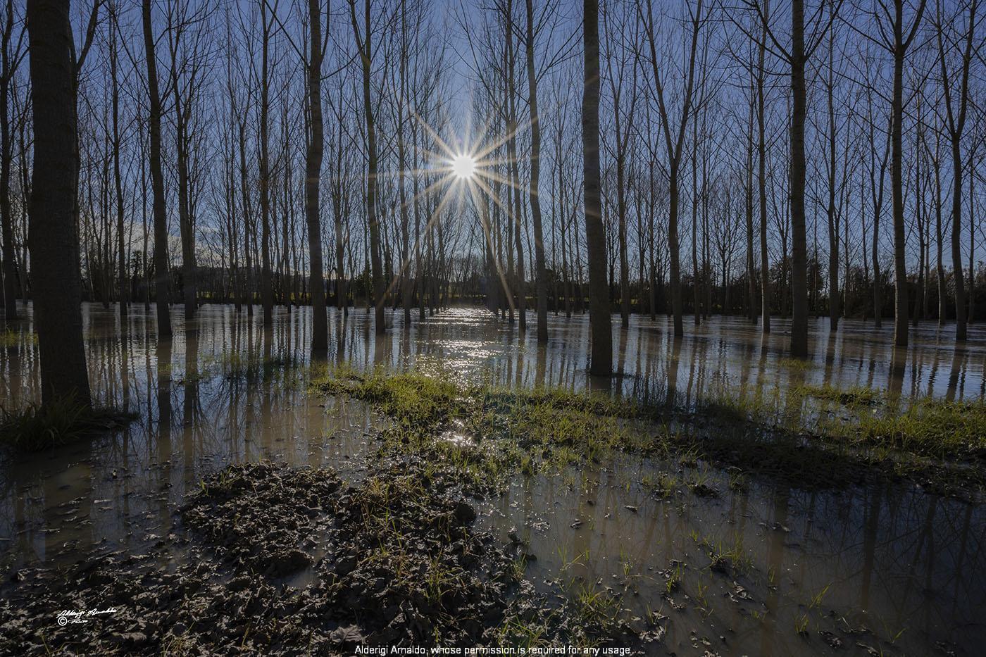 Alderigi Arnaldo fotografo - FORESTS AND TREES - Photo Gallery